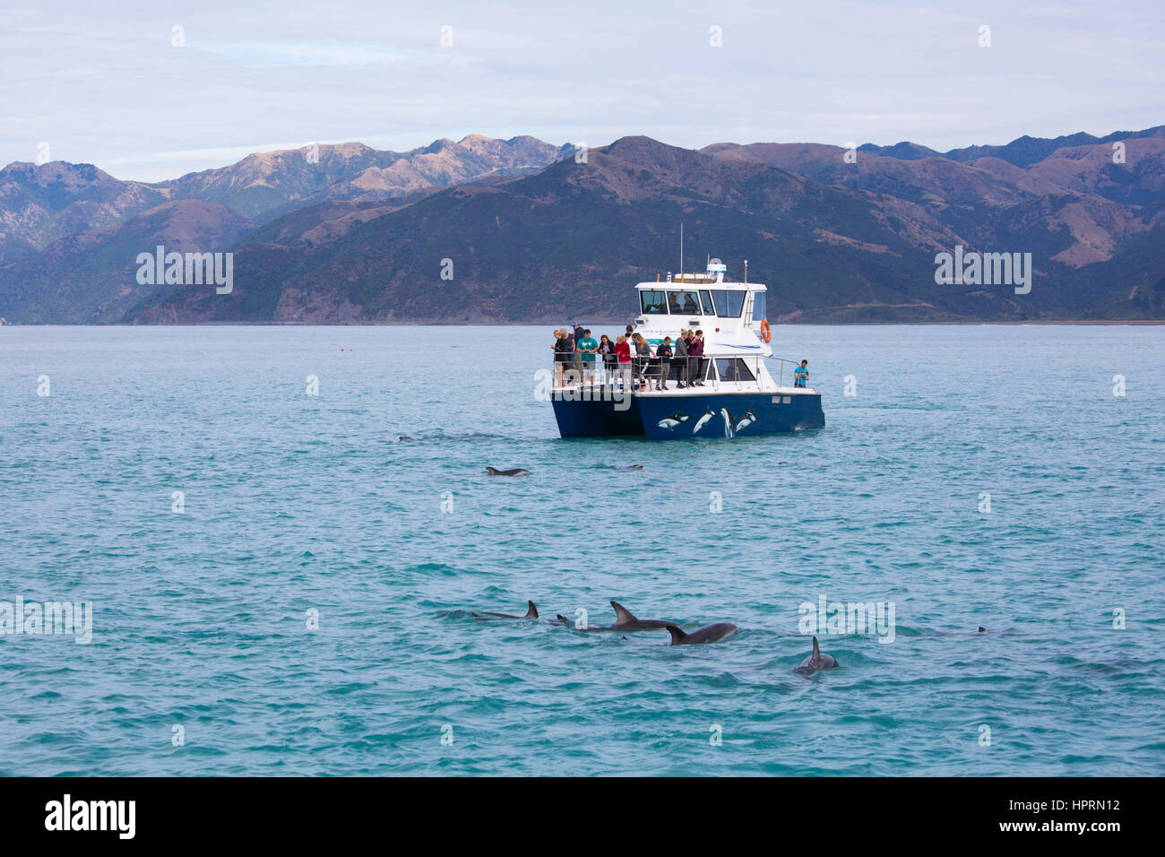 Kaikoura, Canterbury, New Zealand. Tourists watching a pod of dusky dolphins (Lagenorhynchus obscurus) in South - Stock Image