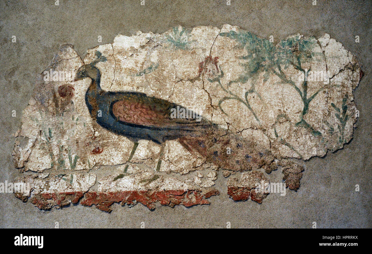 Roman Period. Wall painting. 2nd-3rd century AD. Peacock. Symbol of eternity. In the peak pomegranate, attribute - Stock Image