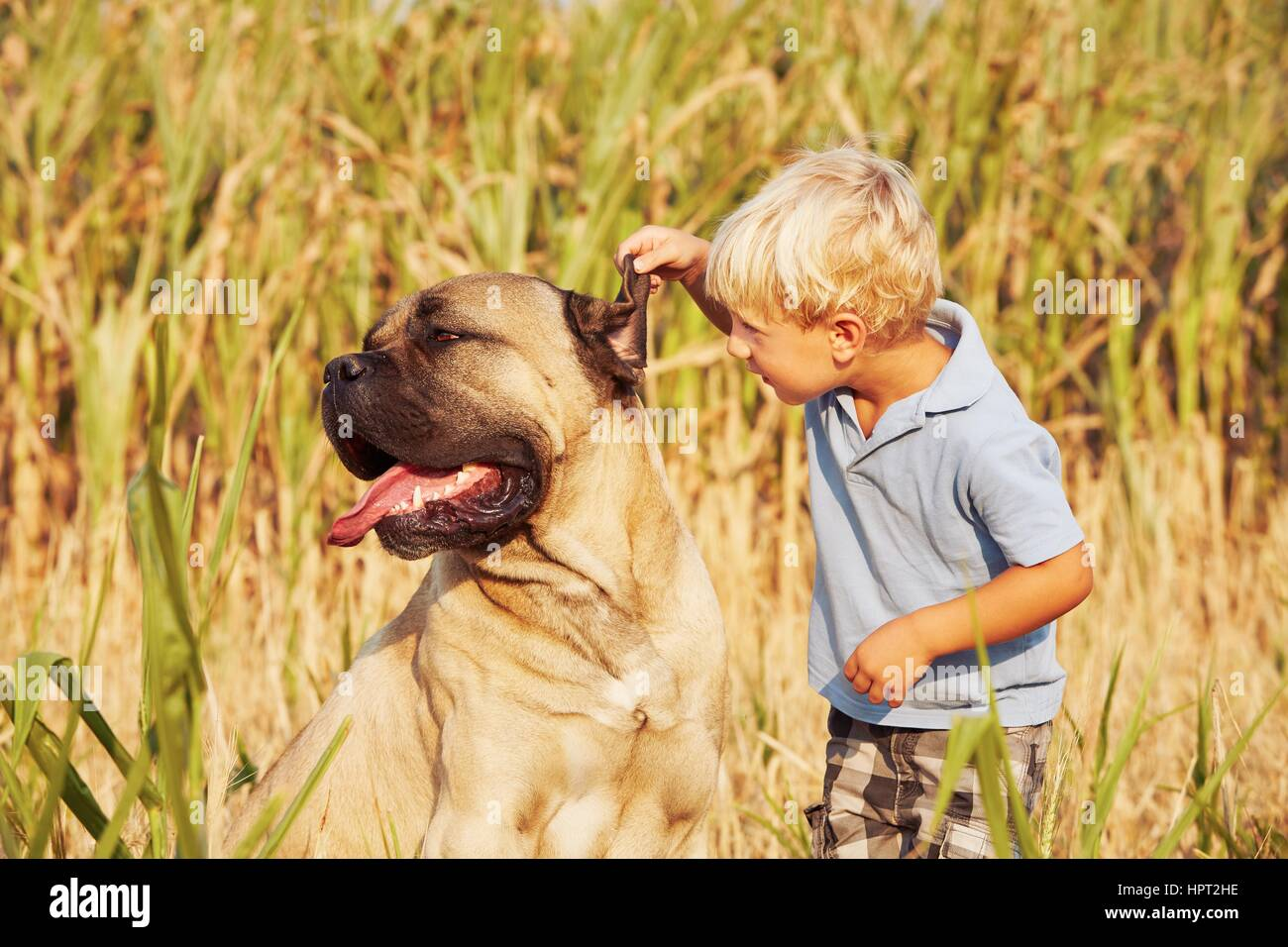 Little boy is playing with his large dog. - Stock Image