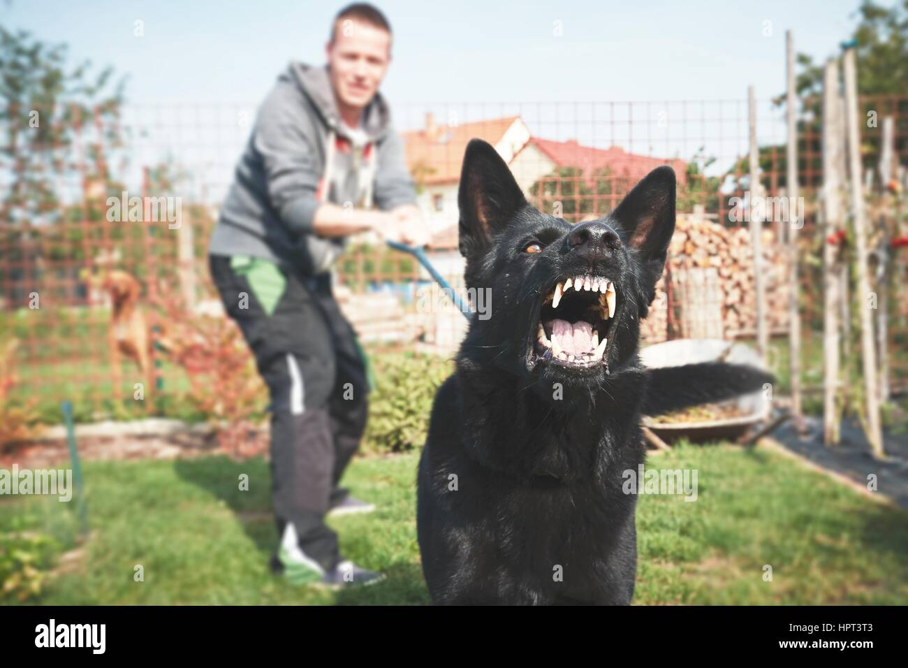 Aggressive dog is barking. Young man with angry black dog on the leash. - Stock Image
