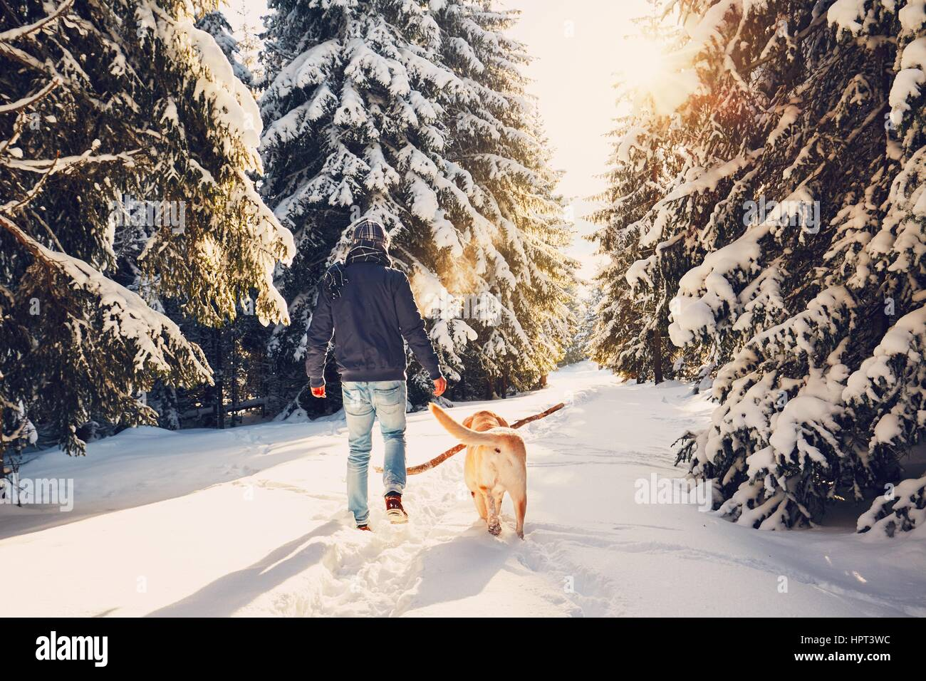 Trip to winter nature. Young man in warm clothes is walking with his labrador in snowy forest. - Stock Image