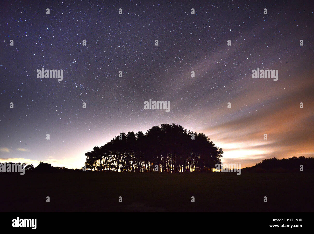 Ashdown Forest, East Sussex, UK. 23rd February 2017. Weather. Stars out in force over the Friends Clump, Ashdown - Stock Image