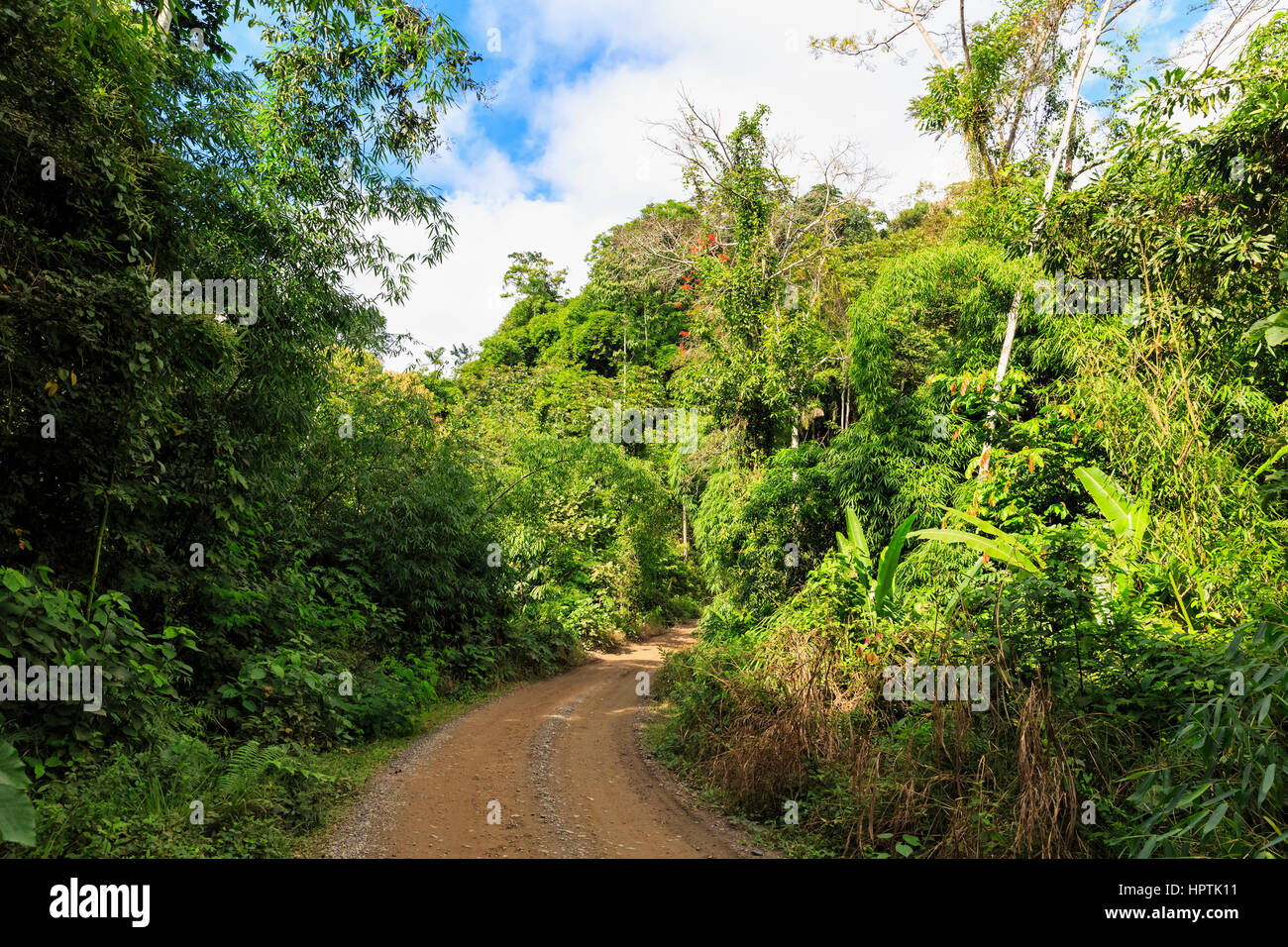 Peru, Amazon basin, piste through the forest - Stock Image