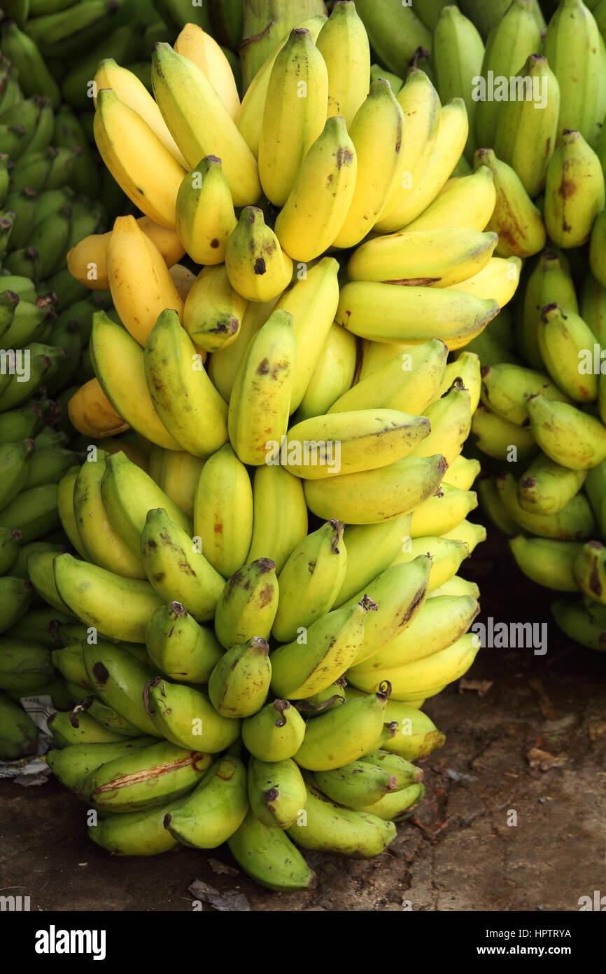 Big Bunch Of Bananas Stock Photo Alamy
