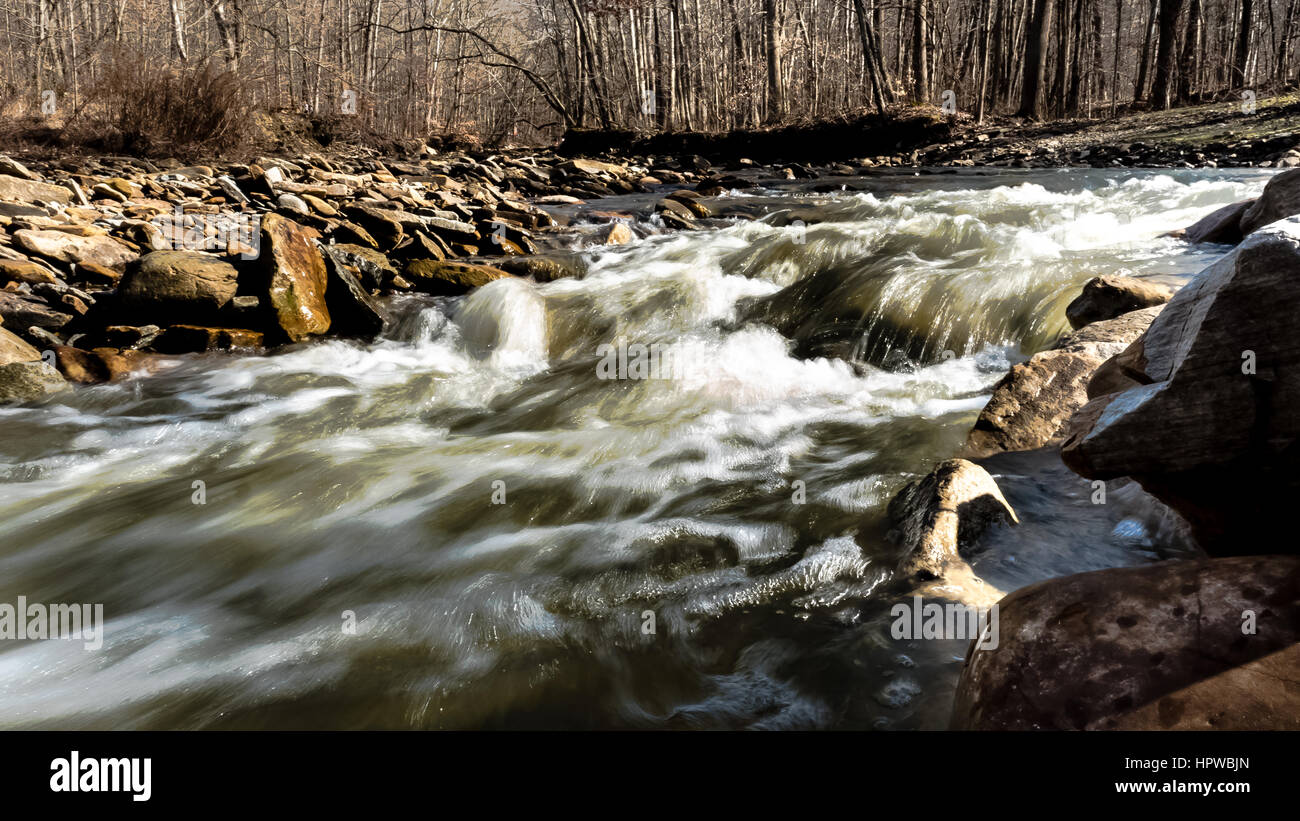 River flowing in the woods - Stock Image