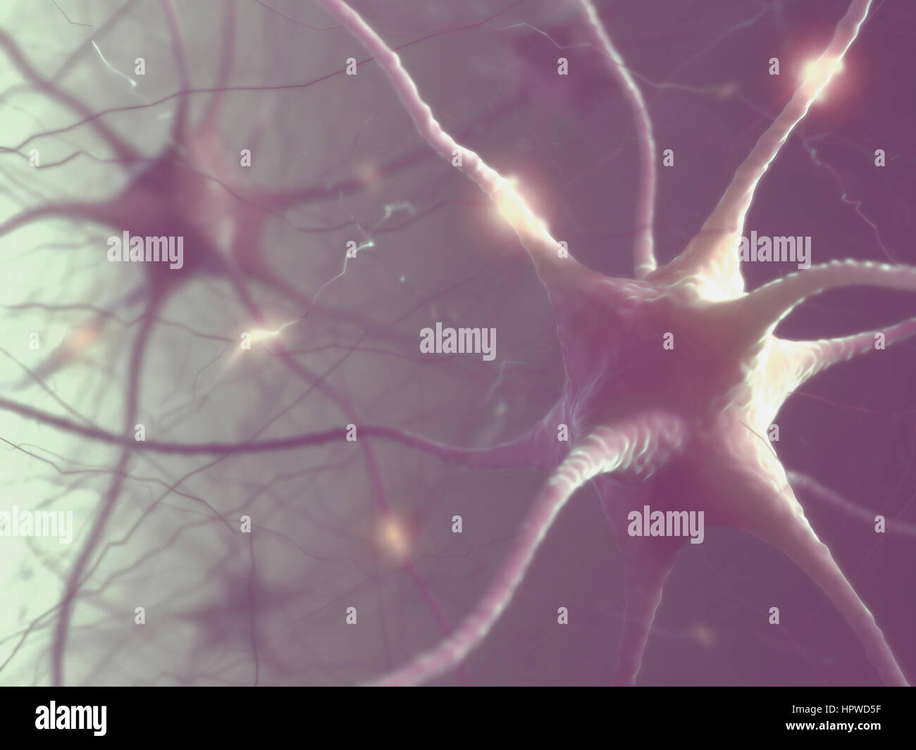 Nerve cells of the human brain, illustration. - Stock Image