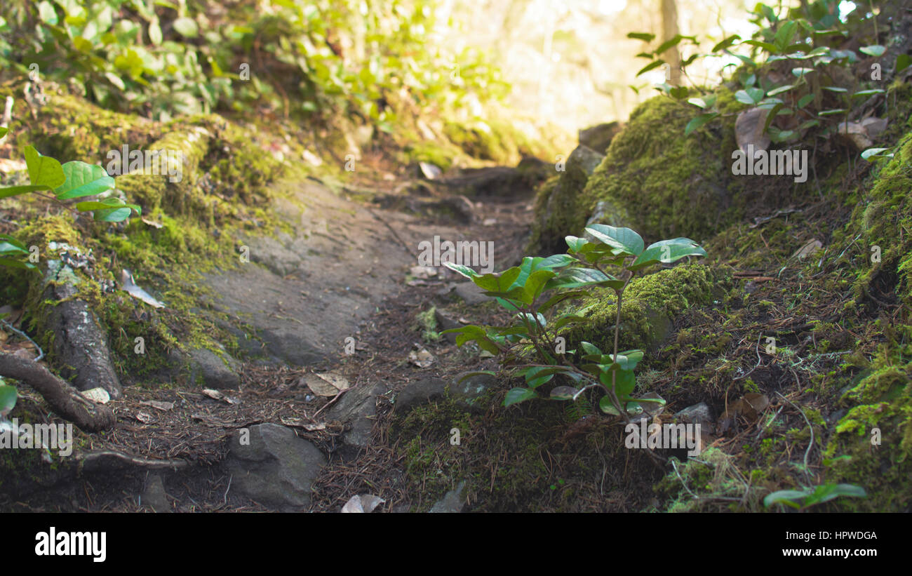 Inviting forest trail in East Sooke Park - Stock Image