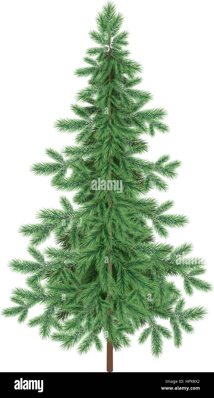 Christmas green spruce fir tree isolated - Stock Vector