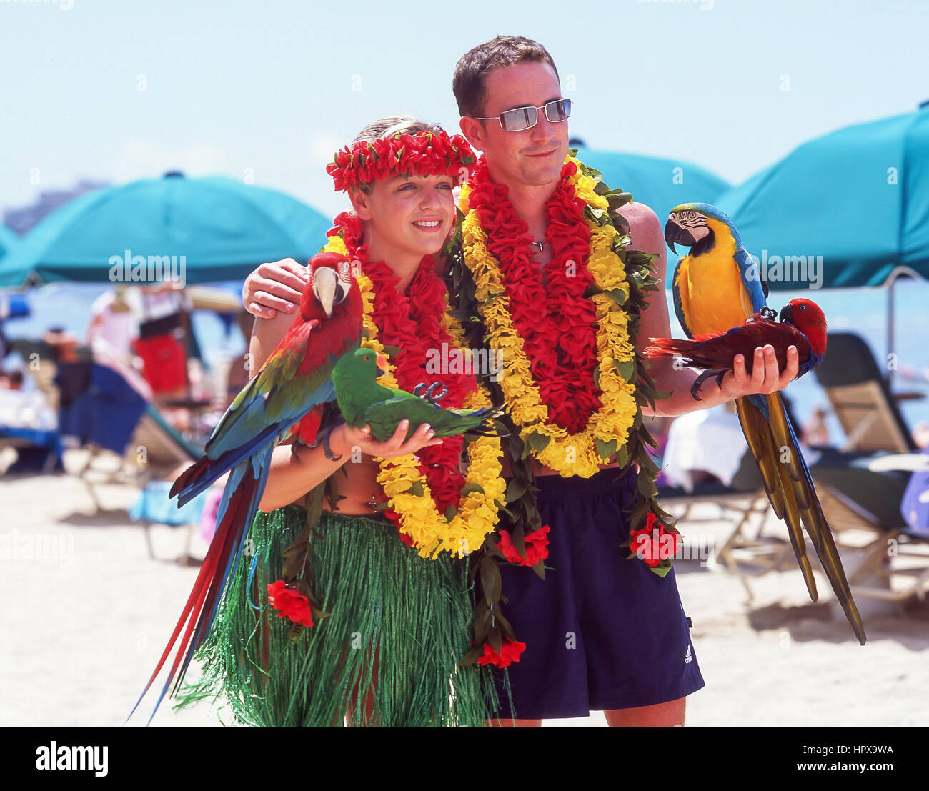 Couple posing for photographs with Macaw parrots, Waikiki Beach, Honolulu, Oahu, Hawaii, United States of America - Stock Image