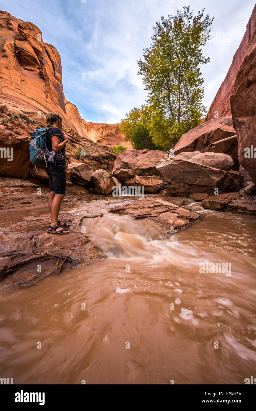 Backpacker crossing small stream Coyote Gulch Grand Staircase Escalante National Monument Utah USA Stock Photo
