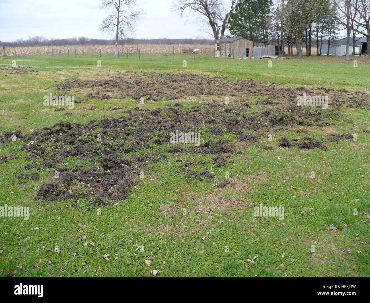 Pastureland destroyed by feral swine rooting, wallowing, and trampling of sensitive vegetation, 2008. Image courtesy - Stock Image
