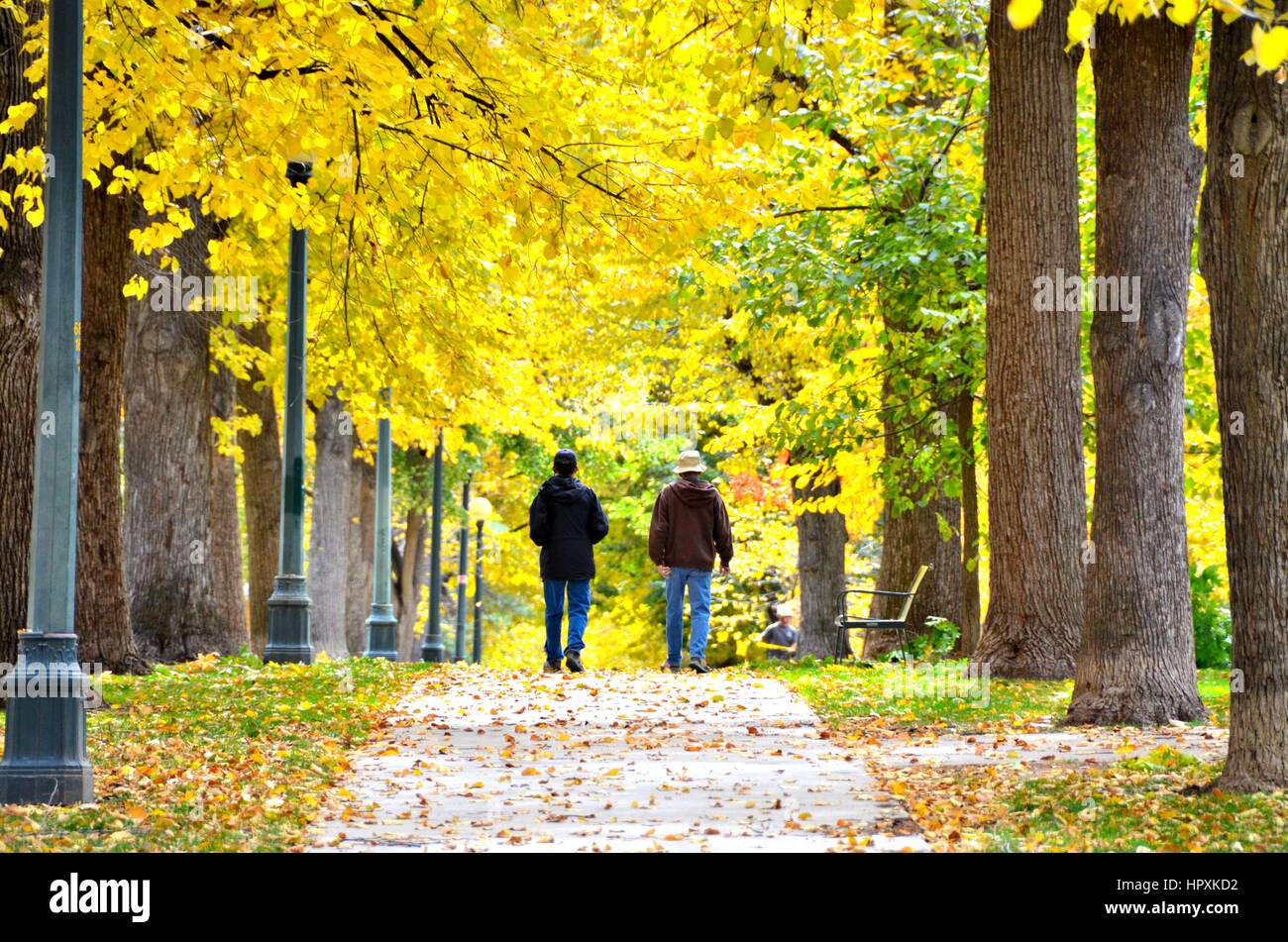 Walking under the Golden Fall Leaves - Stock Image