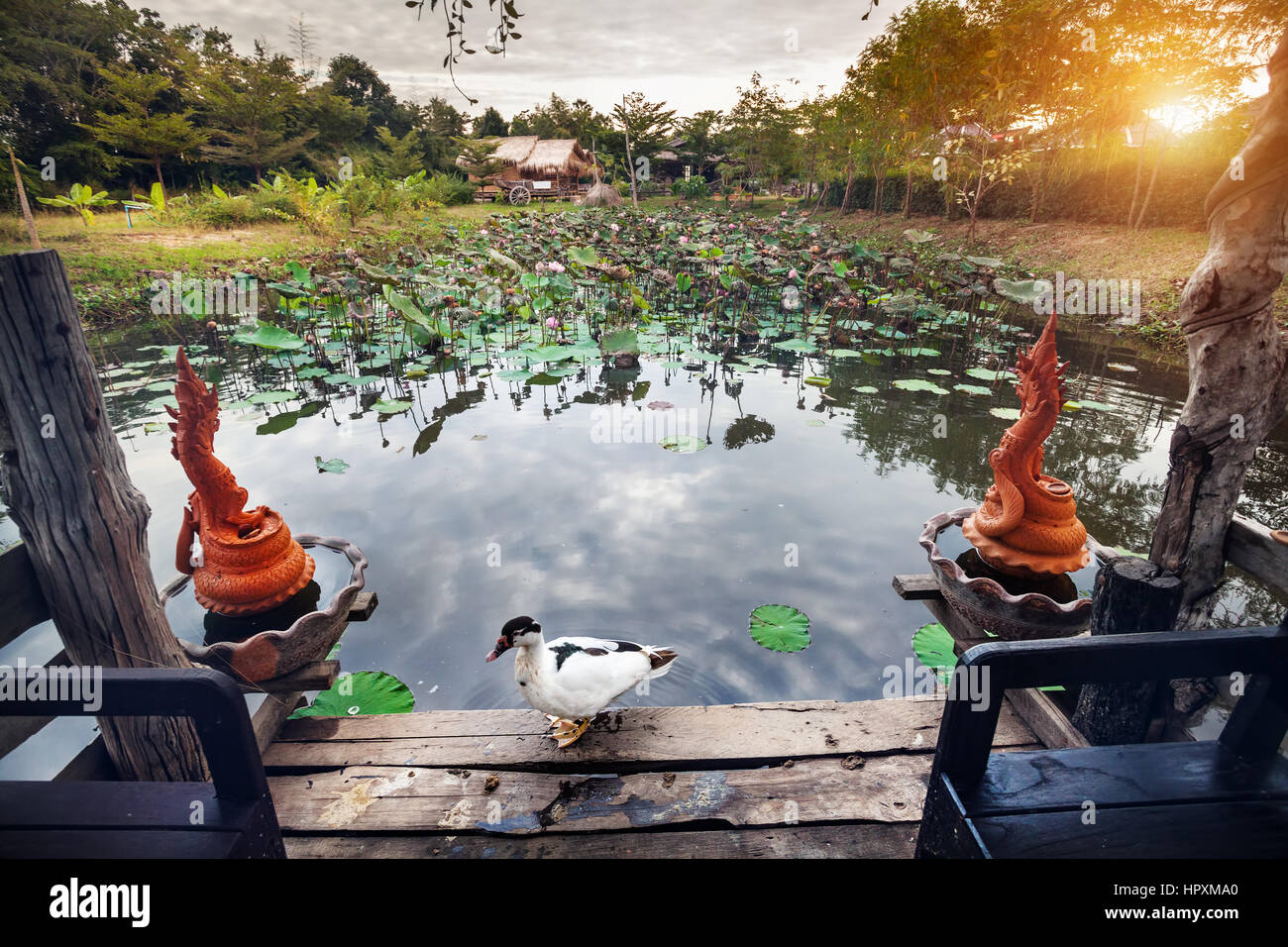 Beautiful White Duck at summerhouse near pond with lotus and Dragon statues in Sukhothai resort, Thailand - Stock Image
