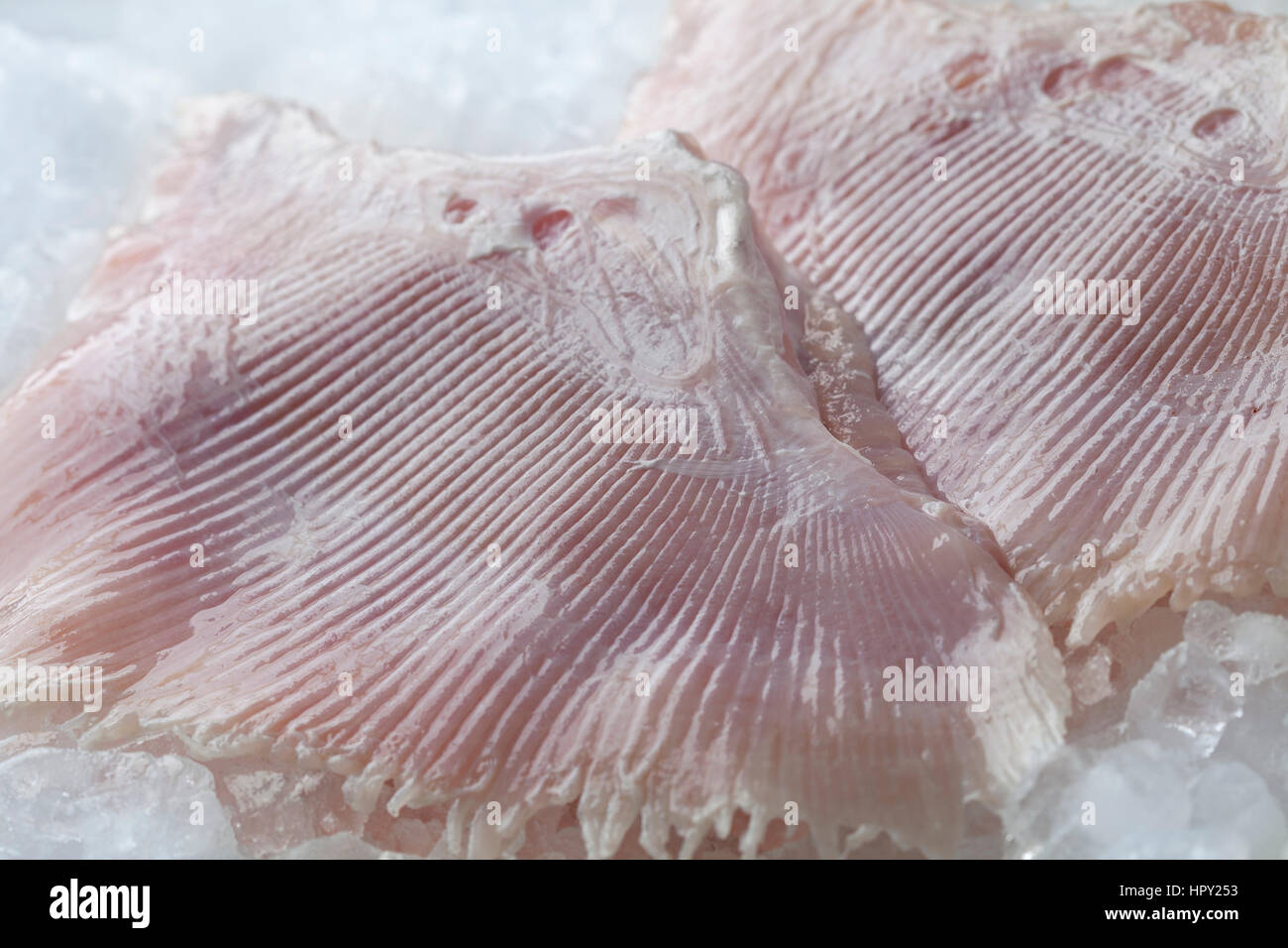 Fresh raw skate fish wings on ice close up, - Stock Image