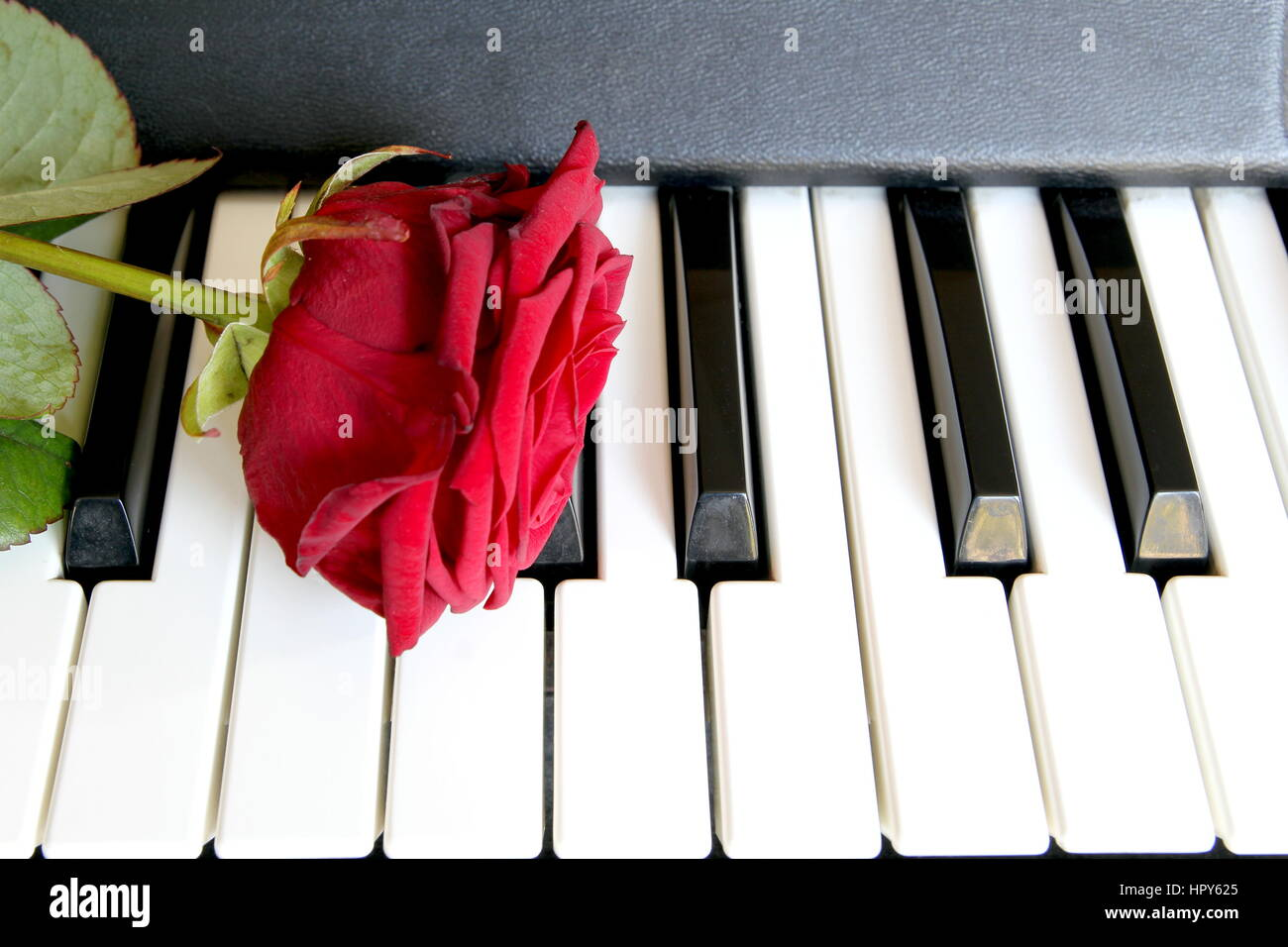 Red rose on piano keyboard  Love song concept, romantic music Stock