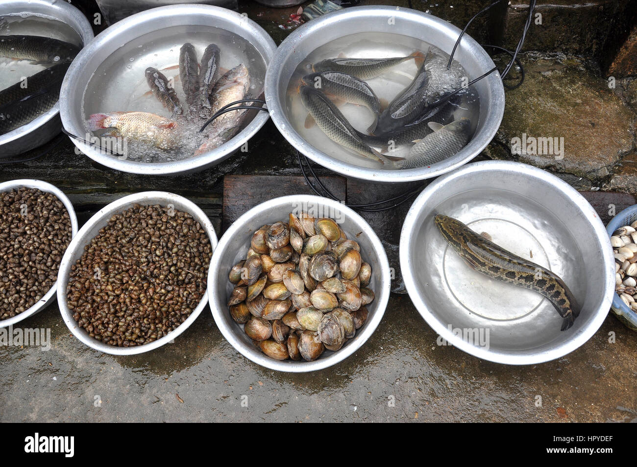 Seafood in a market. Fresh fishes and mussels - Stock Image