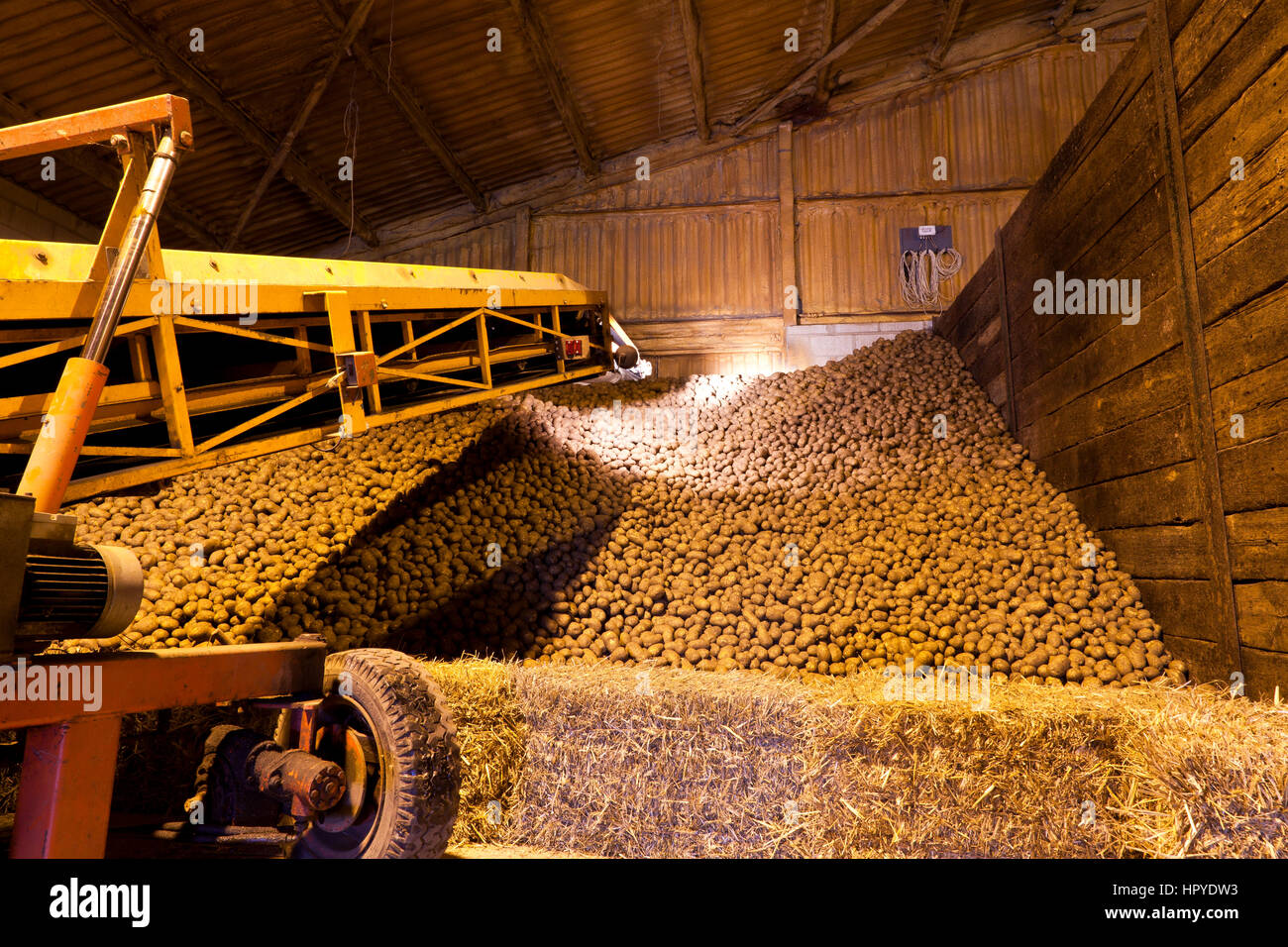 An elevator loading potatoes into a store - Stock Image