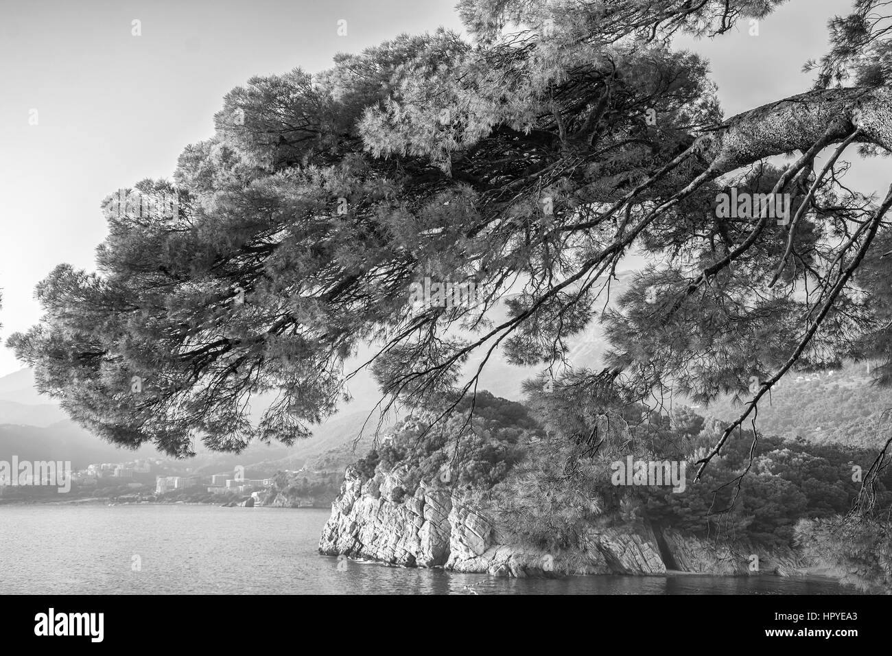 Sea view with rocky coast and pines. Vacation background. Black and white - Stock Image