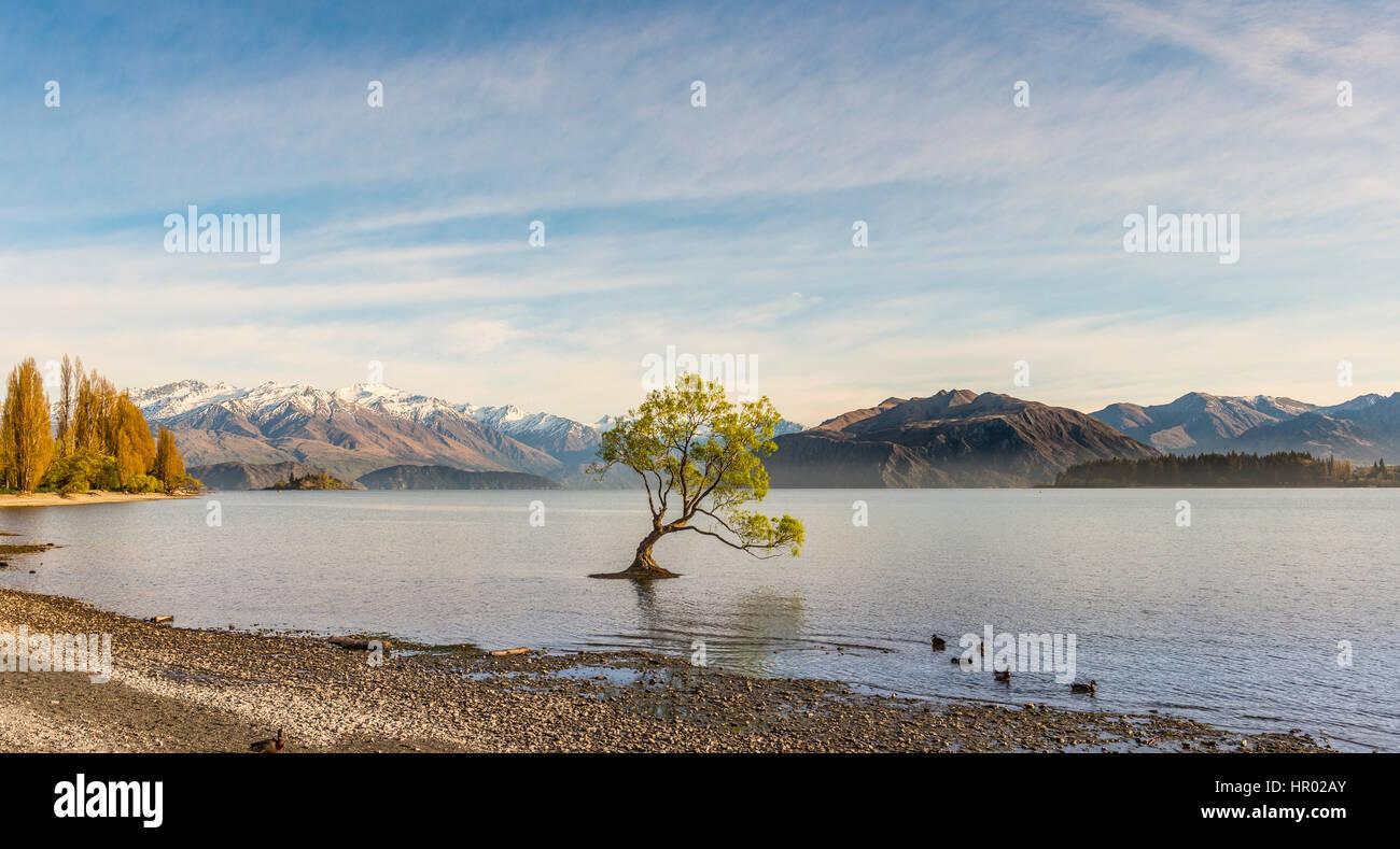 Single tree standing in water, The Wanaka Tree, Lake Wanaka, Roys Bay, Otago, Southland, New Zealand - Stock Image