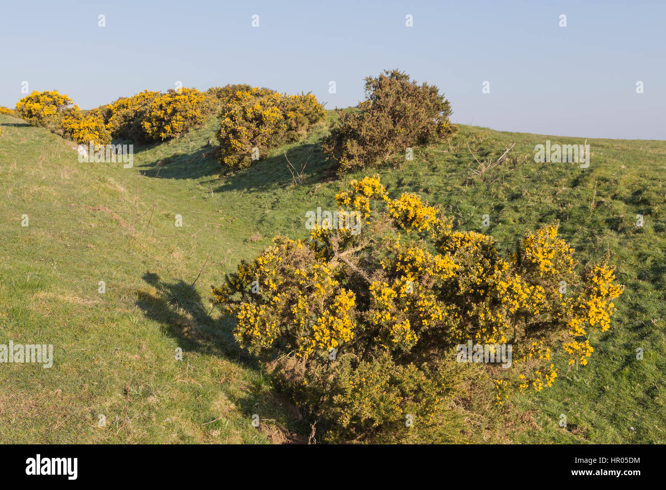 Hadrian's Wall: the Wall ditch near Black Carts, between Limestone Corner and Chesters Roman fort - Stock Image