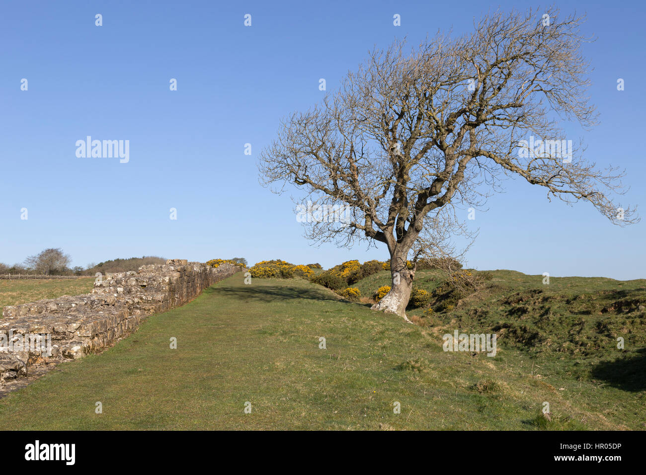 Hadrian's Wall: a stretch of Roman Wall and the accompanying Wall ditch near Black Carts, between Limestone - Stock Image