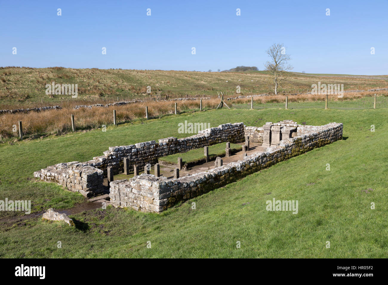 Hadrian's Wall: the remains of the Mithraeum near Carrawburgh (Brocilitia) Roman fort, Northumberland - Stock Image