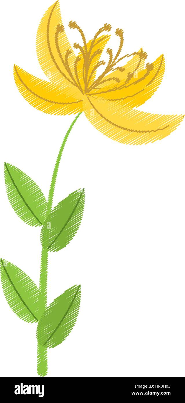 Drawing Yellow Lily Flower Natural Stock Vector Art Illustration