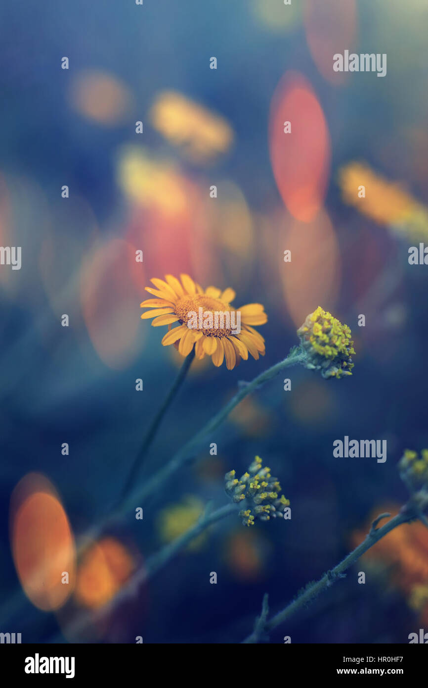 vertical colored wild flowers vertical nature landscape, macro details and shalow focus, colorful bokeh background, - Stock Image