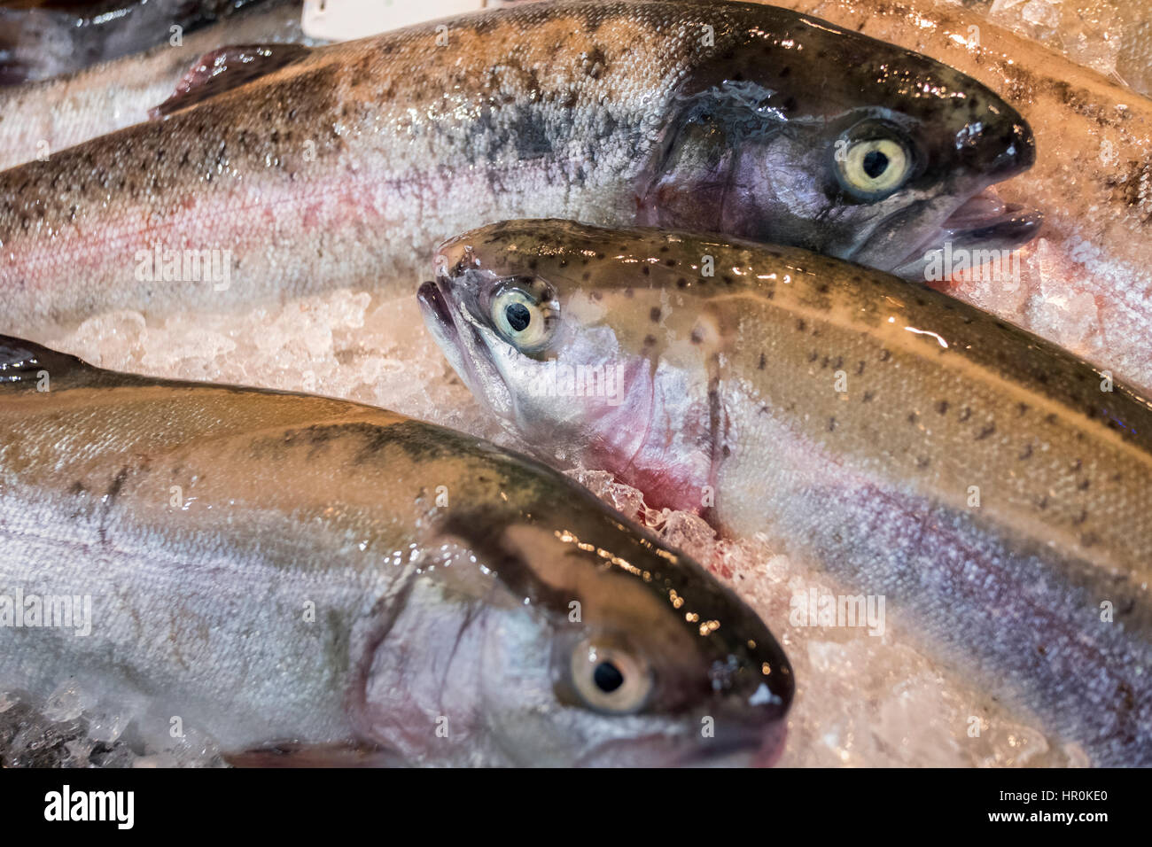 Fresh Fish. Trout on a market stall in a supermarket. A oily fish with healthy omega 3 oils Stock Photo