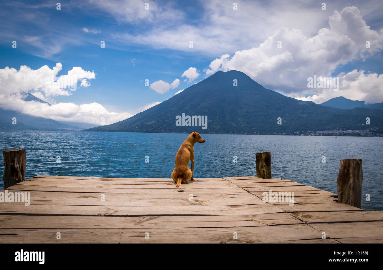 Dog in a wooden pier looking to horizon at Atitlan Lake with San Pedro volcano on the background - San Marcos la - Stock Image
