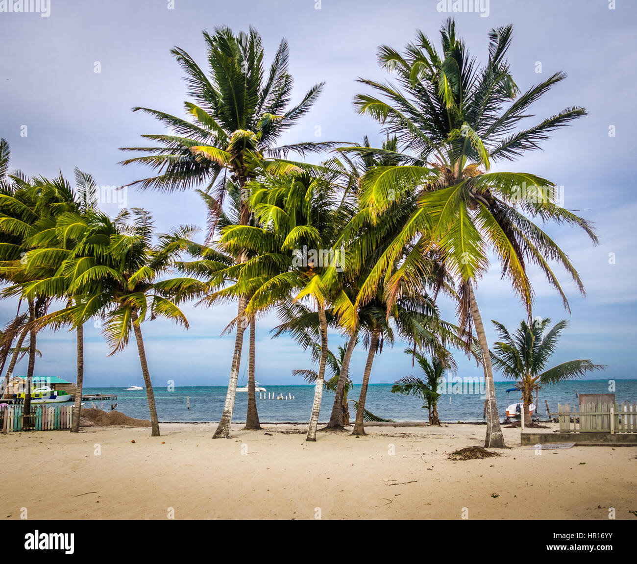 Palm trees in Caye Caulker - Belize - Stock Image