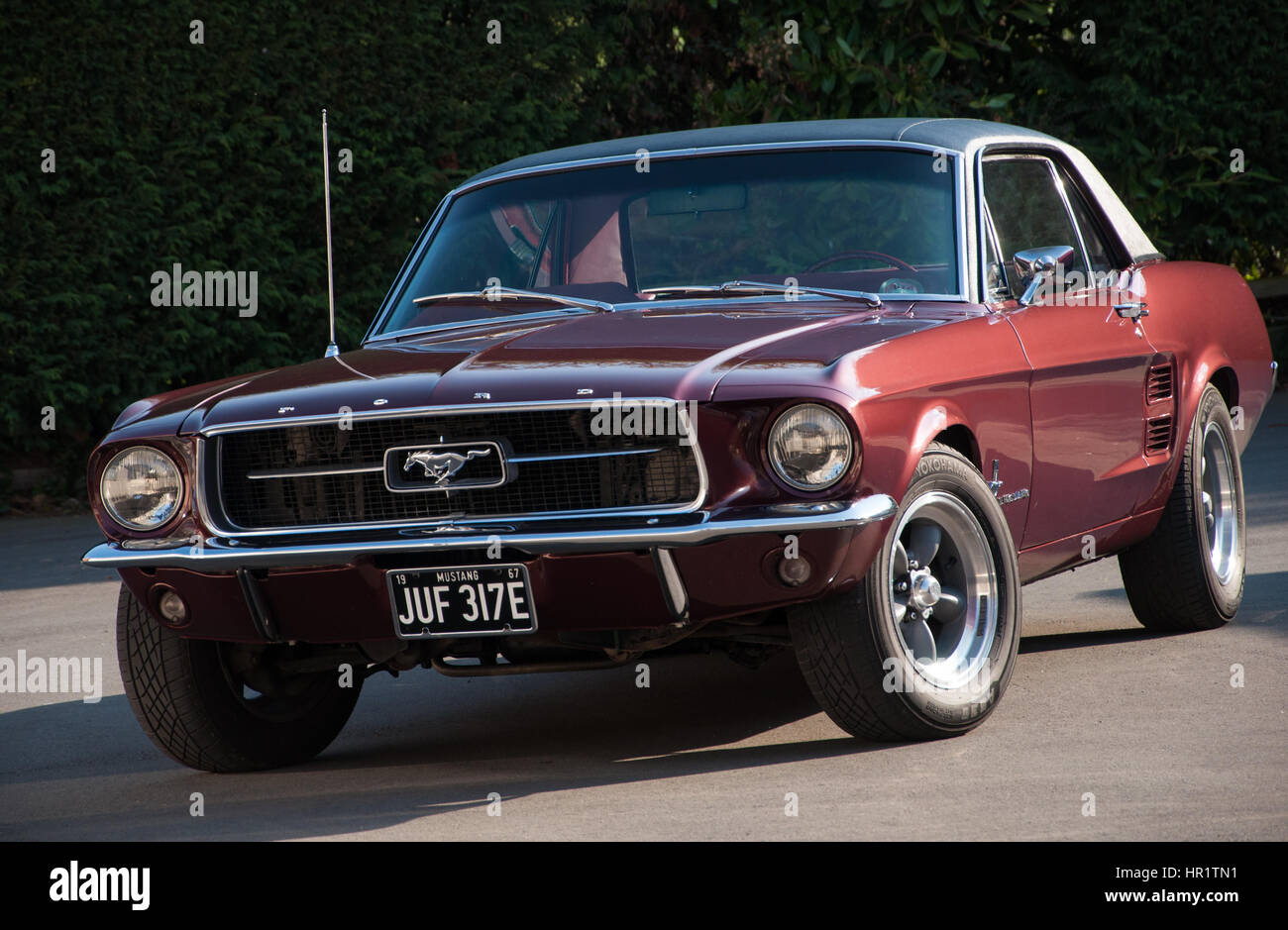 1967 classic ford mustang coupe in burgundy with torque thrust d wheels looking good in the sun