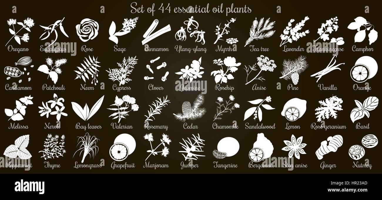 Big vector set of 44 flat style essential oil plants. White Silhouettes on black. Eucalyptus, jasmine, rose, cedar, - Stock Vector