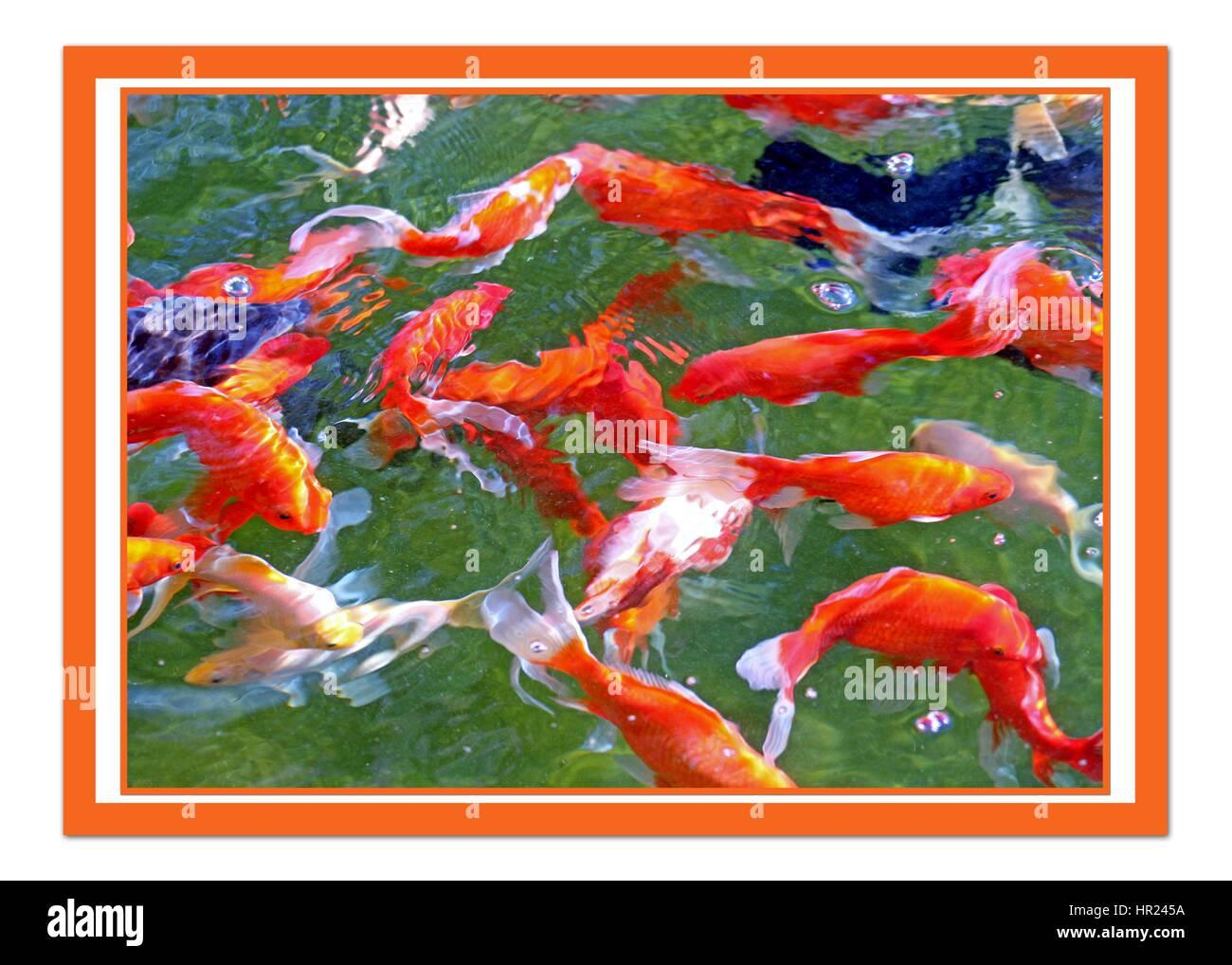 Long Thin Fish Stock Photos & Long Thin Fish Stock Images - Alamy