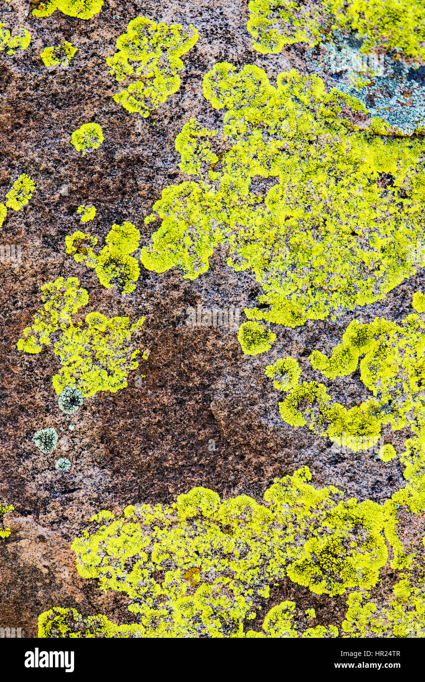 Close-up of rock wall & lichen; algae; popular with climbers; Penitente Canyon; Colorado; USA - Stock Image