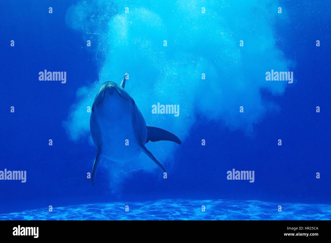 Dolphin under water - Stock Image