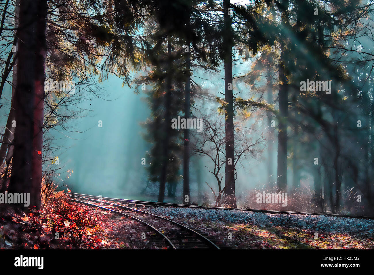 Tale forest - Wonderland - enchanted landscape - Stock Image