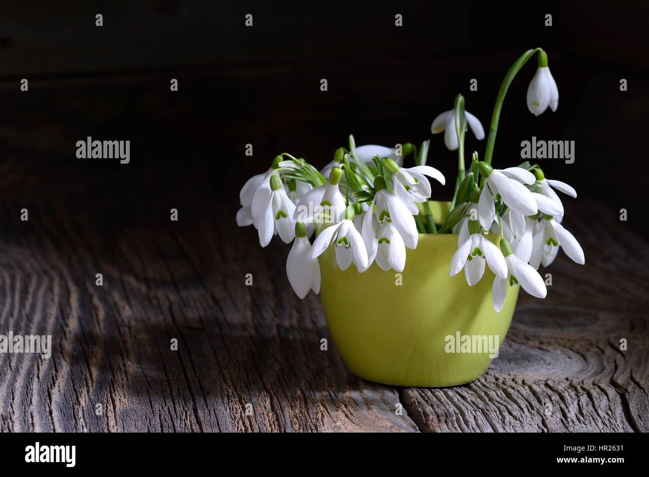 Bouquet Of Beautiful Spring First Flowers Snowdrops In Vase On A