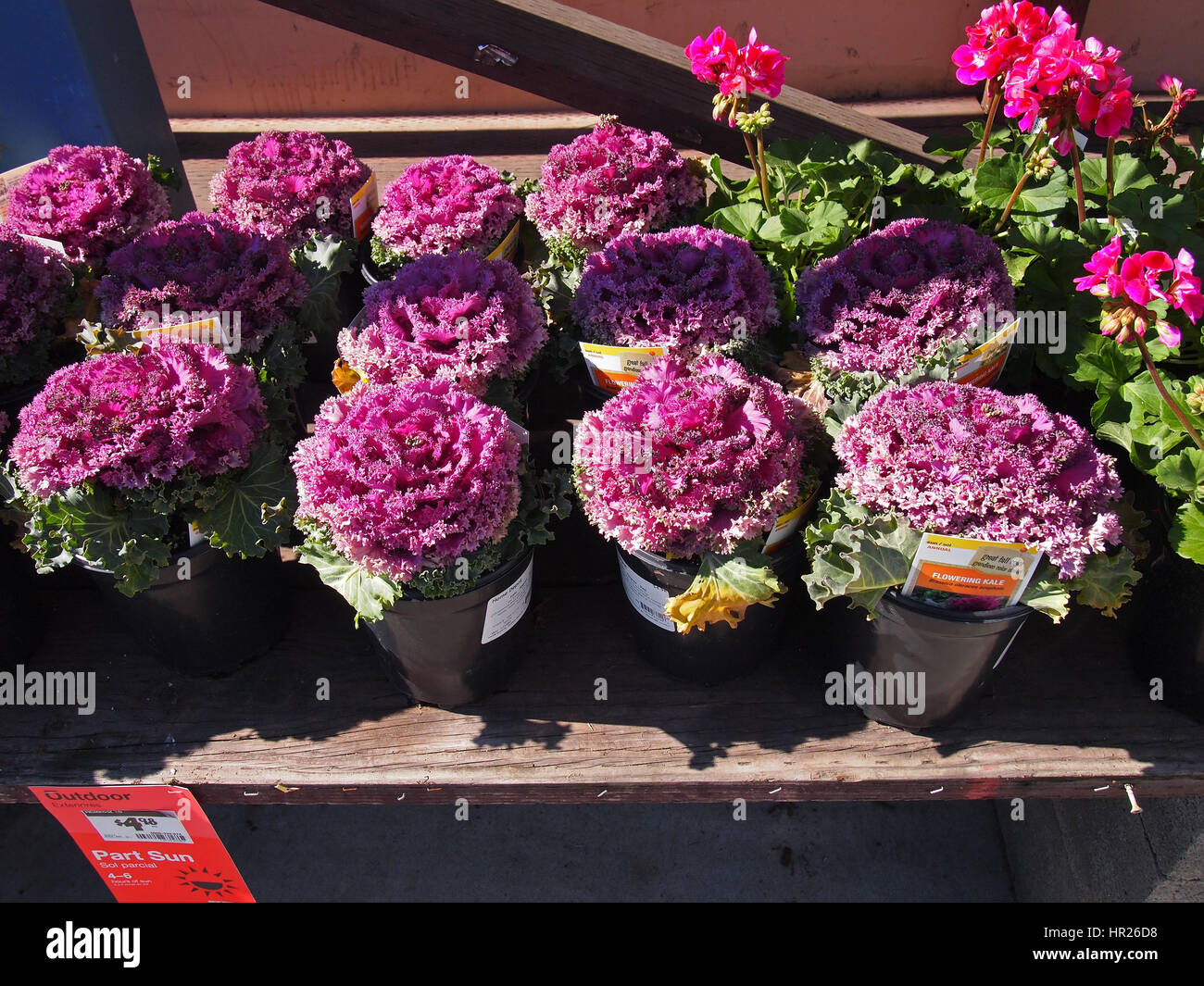 Home Depot Flowers Prices 3d House Drawing