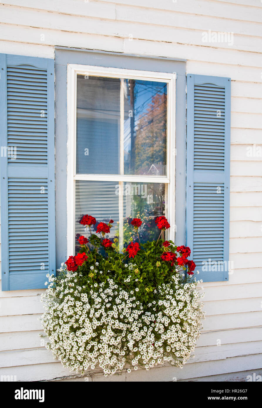 Vintage house window with blue shutters and a windowbox planter with red geraniums flowers and snowflake flowers - Stock Image