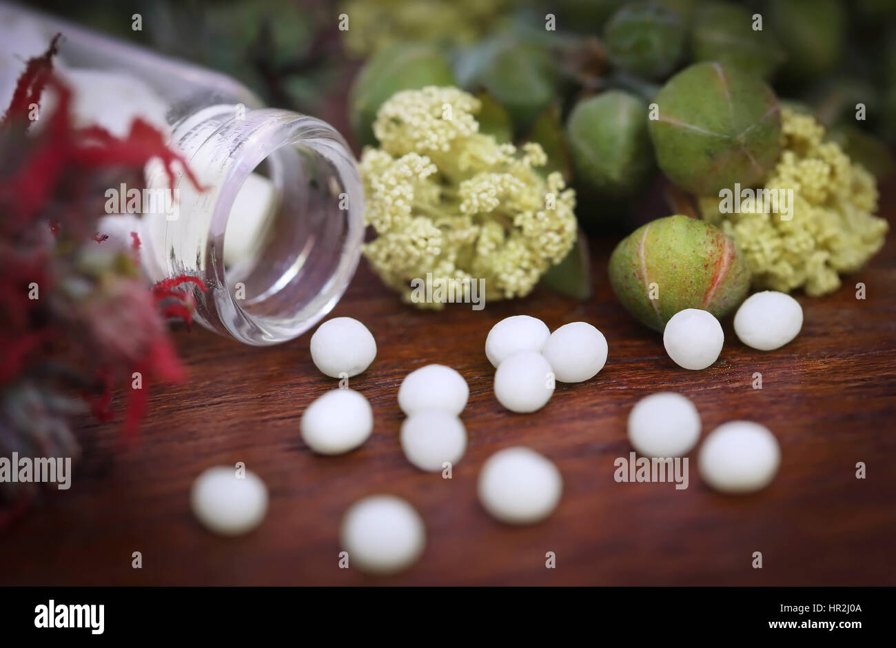 Homeopathy globules with some herbs on wooden surface - Stock Image