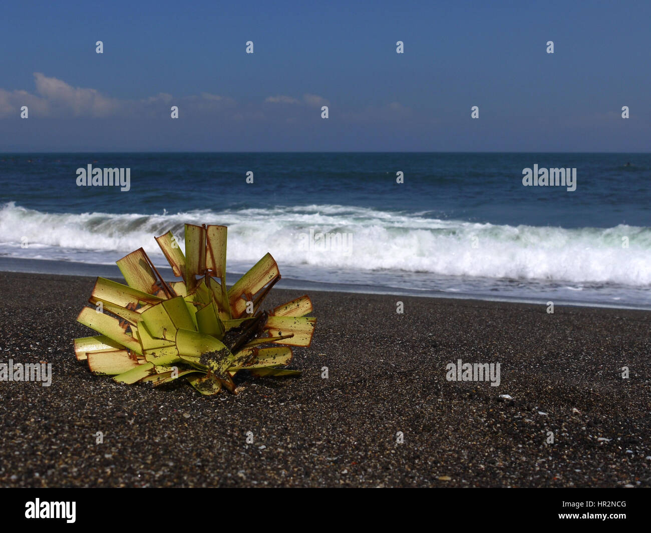 Detail of traditional local offering to sea gods lying on black volcanic sand beach with ocean on the back. Bali, - Stock Image