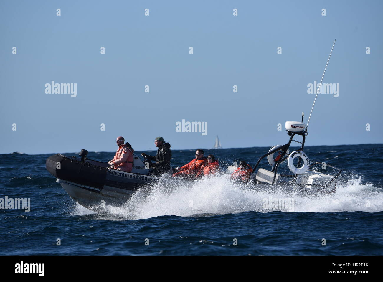 Whale watching ecotourism adventure in small speeding boat, crashing through waves, in Pacific Ocean outside San - Stock Image