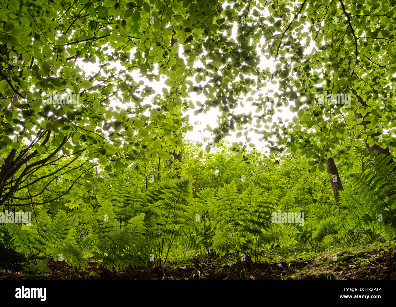 Forest Floor - Stock Image