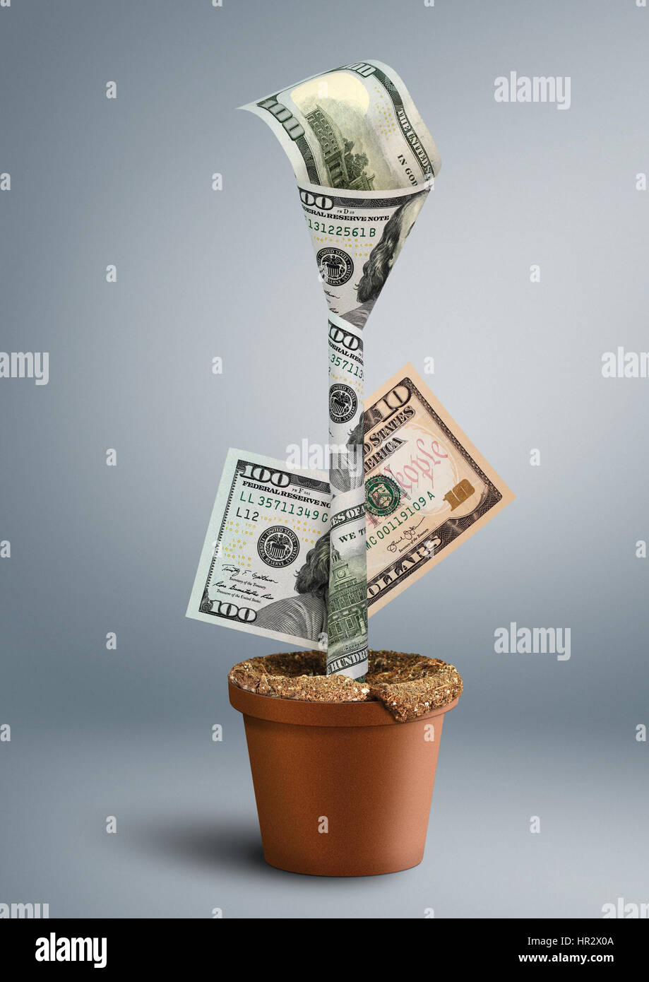 growing wealth creative concept, money as flower in pot - Stock Image