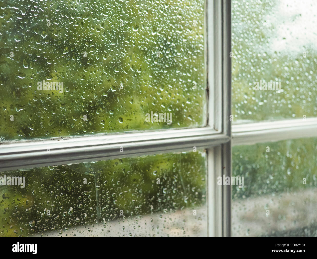 Wet window pane with rain water droplets and greenery background - Stock Image