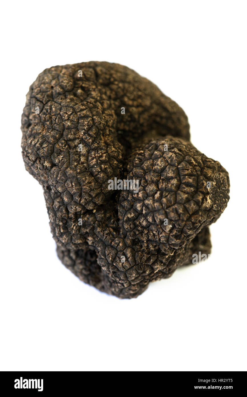 Truffle Tuber melanosporum mushroom on white background, France - Stock Image