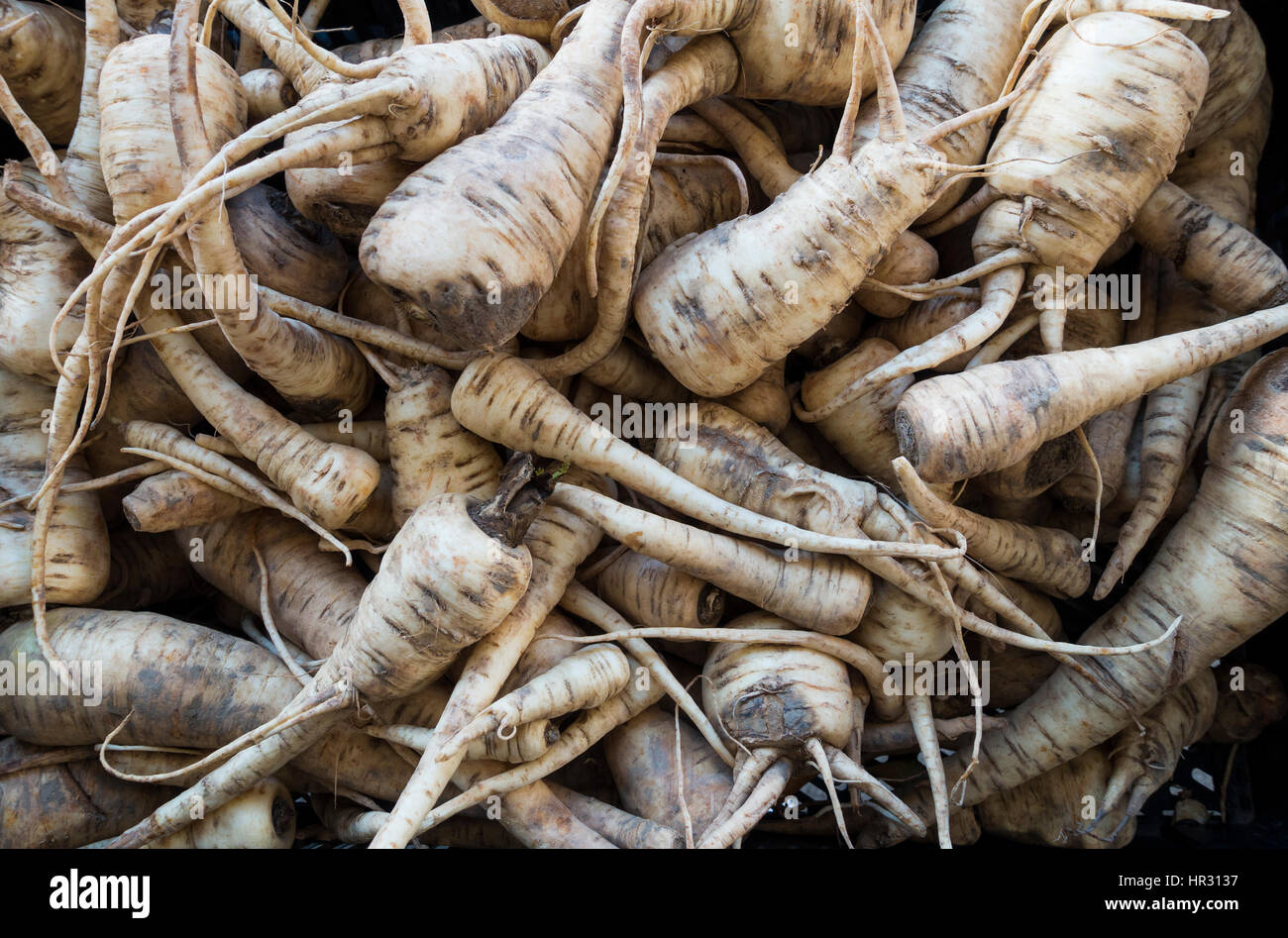 Parsnips - Stock Image