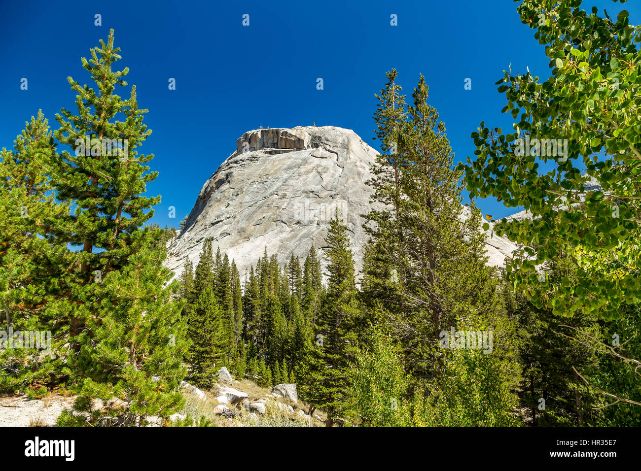Polly Dome is a prominent granite dome rising 1,640 feet (500 m) above the northwest side of Tenaya Lake and Tioga Stock Photo