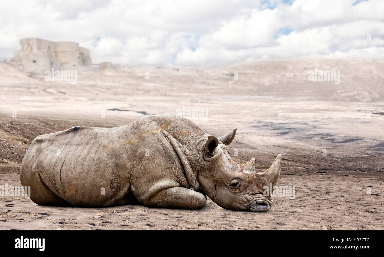 wild rhino rest in a desert abstract image - Stock Image